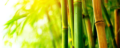 photo of bamboo